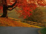 Country Lane, Faquier County, Virginia, USA Fotografisk tryk af Kenneth Garrett
