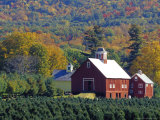 Christmas Tree Farm near Springfield in Autumn, Vermont, USA Photographic Print by Julie Eggers