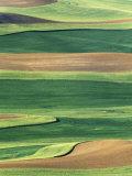 Whitman County, Washington, USA Photographie par Julie Eggers