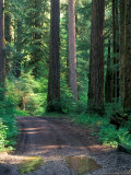 Dirt Road into Opal Creek Wilderness Area, Central Oregon Cascades, USA Photographic Print by Janis Miglavs