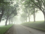 Darling Road with Fog and Maples, Vermont, USA Photographic Print by Darrell Gulin