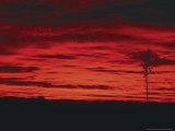 White Sands, New Mexico, USA Fotografie-Druck von Dee Ann Pederson