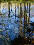 Autumn Reflections in Creek, Great Smoky Mountains National Park, North Carolina, USA Photographic Print by Jerry Ginsberg