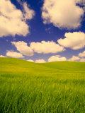 Green Barley Field and Clouds, Palouse, Washington, USA Fotodruck von Terry Eggers
