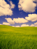 Green Barley Field and Clouds, Palouse, Washington, USA 写真プリント : テリー・エッガース