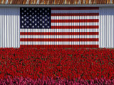 US Flag on Barn and Tulip Field, Skagit Valley, Washington, USA Photographic Print by William Sutton