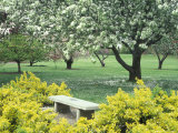 Flowering Trees with Memorial Bench, Yakima Area Arboretum, Washington, USA Photographic Print