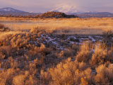 Mount Shasta from Tule Lakes, Kalamath Falls National Wildlife Reserve, Oregon, USA Photographic Print by William Sutton