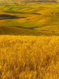 Mid-Season Fields Rolling Hills, Palouse, Washington, USA Photographic Print by Terry Eggers