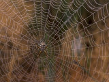 Spider in Web, Washington, USA Photographic Print by Terry Eggers