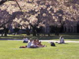 Cherry Blossoms and Trees in the Quad, University of Washington, Seattle, Washington, USA Photographic Print by Connie Ricca