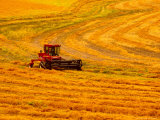 Combine Swathing Crop, Palouse, Washington, USA Photographic Print by Terry Eggers