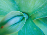 Agave Plant Detail, University of North Carolina at Charlotte Botanical Gardens, USA Photographic Print by Brent Bergherm