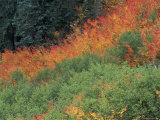 Autumn Color in the Mt. Rainier National Park, Washington, USA Photographic Print by William Sutton