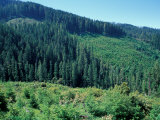 Clearcuts in Spruce-Fir Forest, Siskiyou National Forest, Siskiyou Mountains, Oregon, USA Photographic Print by Jerry & Marcy Monkman