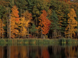 Wetlands in Fall, Peverly Pond, New Hampshire, USA Fotografie-Druck von Jerry & Marcy Monkman