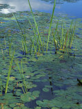 Water Lilies, New Hampshire, USA Fotografie-Druck von Jerry & Marcy Monkman