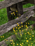 Rail Fence and Buttercups, Pioneer Homestead, Great Smoky Mountains National Park, N. Carolina, USA Photographic Print by Adam Jones