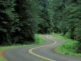 Forest Road in Olympic National Park, Washington, USA Photographic Print by Adam Jones