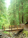 Trail Bridge, Upper Sol Duc Valley, Olympic National Park, Washington, USA Photographic Print