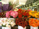 Dahlias For Sale at the Pike Street Market, Seattle, Washington, USA Photographic Print