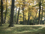 Scenic Woods in Sunshine Photographic Print