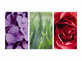 Floral Triptych Posters