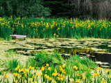 Daffodils Surround a Dock and Lake near Rosario Resort, San Juan Island, USA Photographic Print by Tom Haseltine