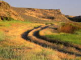 Trail in Grasslands, Columbia National Wildlife Refuge, near Othello, Washington, USA Photographic Print