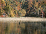 Scenic Forest Along Peaceful Lakeshore Photographic Print