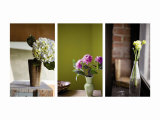 Spring&#39;s Stems Triptych Prints
