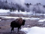 American Bison Walking along Edge of Wintry Thermal Pool, Yellowstone National Park, Wyoming, USA Photographic Print by Howie Garber