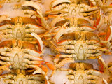 Dungeness Crab, Pike's Place Market, Seattle, Washington, USA Photographic Print