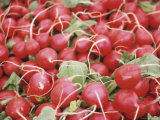Pile of Ripe Radishes Photographic Print
