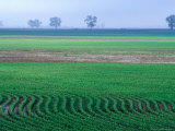 Spring Plowed Field of Crops Photographic Print by Gayle Harper