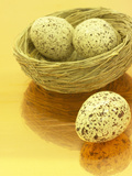 Speckled Eggs in a Little Bird&#39;s Nest Photographic Print