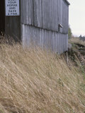 Prairie Grass and Old Barn Photographie