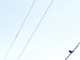 Small Bird Resting on Thin Power Lines Photographic Print