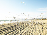 Flock of Seagulls Flying Across Water and Sand Photographic Print