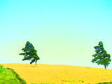 Two Trees in a Field Blowing in the Wind Photographic Print