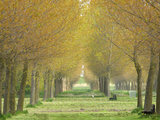 A Long Grassy Path Lined with Trees Photographic Print