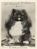 Champion Ki-Pung of Alderbourne Papier Photo