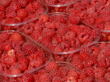 Several Containers of Fresh Sweet Red Raspberries Photographic Print