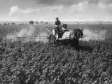 Crop-Spraying Potatoes Photographic Print