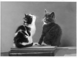 Black and White Kitten and a Grey and White Kitten Sit Atop Some Books Photographic Print