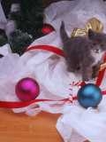Kitten Near Christmas Ornaments Photographic Print by Leslie Harris