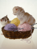 Two Kittens In Basket With Balls of Yarn Photographic Print by Leslie Harris