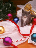 Kitten with Christmas Decoration Photographic Print by Leslie Harris