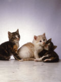 Three Kittens Photographic Print by Leslie Harris