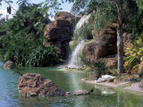 Bird Lagoon, Metrozoo, Miami, FL Photographic Print by Mark Gibson